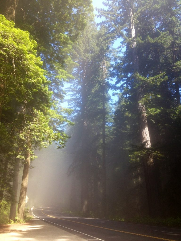 God's Church in the Redwoods